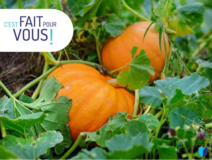Photo de la dernière actualité - 👨🌾 Calendrier du jardinier : Le mois d'Octobre 🍁🍂